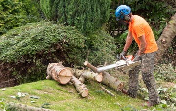 additional services offered by Brampton Ash tree surgeons