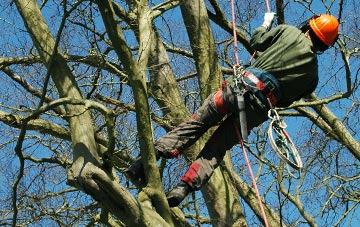tree surgery Brampton Ash, Northamptonshire