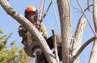 Brampton Ash tree dead wooding services