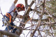 trusted Northamptonshire tree dead-wooding services
